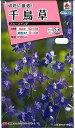 オール1割引き!花の種 千鳥草 ブルースイング 0.5ml タキイ交配
