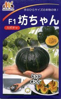 かぼちゃ坊ちゃん 10粒みかど協和交配