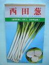 野菜種 ねぎ西田葱 20mlカネコ種苗
