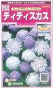 花の種 オール1割引き!ディディスカス レースフラワーミックス 小袋 サカタのタネ