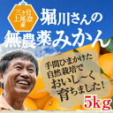 みかん 送料無料 5kg【三ヶ日みかん】...