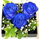 青いバラ ブルーローズ 奇跡の青い薔薇(バラ) フラワーボッ...