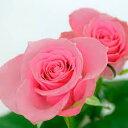 お好きな本数でバラの花束(カラー(色):ピンク)お祝い・ギフト・誕生日・プレゼントに【母の日】【ギフト】