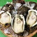 岩牡蠣 天然 日本海産 大10個 2.7〜3.2k 生食用 カラ割り 殻付き 岩がき 岩ガキ お中