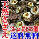 お歳暮 山形県産 サザエ 3kg約38個 バーベキュー 海鮮 さざえ 刺身 生食用 【楽ギフ_のし】【楽ギフ_のし宛書】