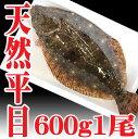 山形県産 天然 ヒラメ 1尾600g前後 冷蔵 さばいてお届け 高級魚 ひらめ 鮮魚 平目 お祝い 海鮮