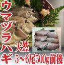 ウマヅラハギ 山形県産 500g4?6尾 冷凍 鮮魚セット カワハギ ウマズラハギ【あす楽】