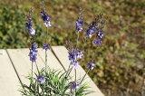 【造花】 ラベンダーブッシュ E3454 【カントリー 造花】【country】