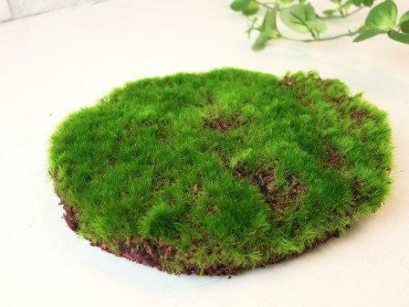 【モスマット(S)】ディスプレイに*造花のグリーンマット 芝生マット ナチュラル雑貨 インテリア雑貨