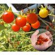 【ゆうパケット対応可能】【取寄せ】野菜種 超ミニトマト 豆トマト