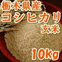 新米29年産 栃木県産コシヒカリ玄米 10kg