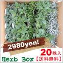 【送料無料】 ハーブ苗詰込BOX 20株セット【レビュー必見!】【FS_708-7】【NW】