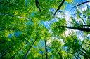 ロビンの森 アロマオイル 森の散歩 -Fresh- 105ml アロマオイル ブレンド 精油 エッセンシャルオイル アロマ
