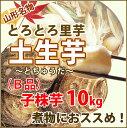 里芋 さといも 山形 訳あり 送料無料 10kg 子株 (B品) さといも 土生芋 ( とちゅうだ )