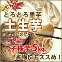 里芋 さといも 山形 訳あり 送料無料 5kg 子株 (B品) さといも 土生芋 ( とちゅうだ )