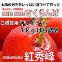 【農家直送】Sun Sun さくらんぼ 紅秀峰 (秀2L〜L)バラ詰め 1kg