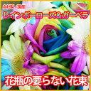 レインボーローズとレインボーガーベラの花瓶のいらない花束《母の日・愛妻の日・ホワイトデー・誕生日・結婚記念日》 05P03Dec16