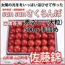 Sun Sun さくらんぼ 佐藤錦 大粒(秀L)手詰め500g