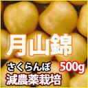【送料無料】魅惑の黄色いさくらんぼ『月山錦』500g 手詰め風 ばら詰め