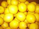 海外産レモンMサイズ20個〔C〕北港直販☆れもん・檸檬