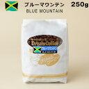 コーヒー豆ブルーマウンテンブルマン100%250gコーヒー珈琲【メール便送料無料】
