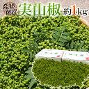 """""""実さんしょ""""(生山椒) 約1kg 山椒"""