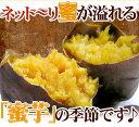 【送料無料】種子...