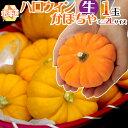 """北海道産 """"ハロウィンかぼちゃ"""" ミニサイズ おもちゃかぼちゃ【予約 10月発送】"""