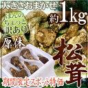 """【緊急スポット】中国産 """"松茸"""" 約1kg 原体 大きさおまかせ ちょっと訳あり【2週間以"""