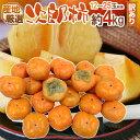 """【送料無料】""""次郎柿"""" 訳あり 12〜25玉前後 約4kg ..."""