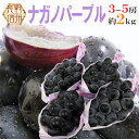 """【送料無料】長野産 """"ナガノパープル"""" 秀品 3〜5房 約2..."""