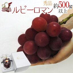 """【送料無料】石川産 """"ルビーロマン"""" 大房 1房約500g以上!【予約 8月以降】"""