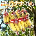 """【送料無料】""""バナナ"""" 約4kg 訳あり【予約 入荷次第発送】【楽ギフ_のし宛書】"""