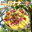 """【送料無料】""""バナナ"""" 約8kg 訳あり【予約 入荷次第発送】【楽ギフ_のし宛書】"""