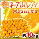 """【送料無料】""""ネーブルオレンジ"""" 約10kg 大きさおまかせ オーストラリア産【予約 7月"""