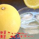 ニューサマーオレンジティー10袋入(粉末ジュース) 静岡県 伊豆限定 おみやげにも 日向みかん 柑橘類 清涼飲料水 オレンジジュース お試し ぽっきり おつまみ