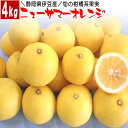 ニューサマーオレンジ 静岡県 伊豆産 4kg 旬の果物 柑橘類 フルーツ ギフト 父の日 贈答用 送...