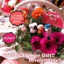 母の日 鉢植え スヌーピー フラワーギフト 季節のお花お任せギフト♪ スヌーピー チャリー ウッドストックetc... マスコット3個入り 母の日 花鉢 プレゼント