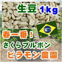 さくらブルボン【1kg】生豆