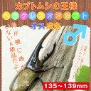 [カブトムシ]☆ヘラクレス オオカブト成虫 オスの135mm〜139mm