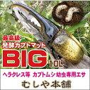 《昆虫マット》高カロリー!カブトムシ幼虫のエサはコレ!廃菌床発酵カブトムシ マット「BIG」10リットル!