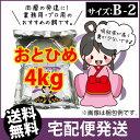 (送料無料※宅配) 日清丸紅飼料おとひめB2 (沈降性)4kg/メダカのごはん・稚魚の餌・