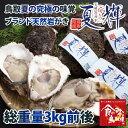 鳥取県産 ブランド天然岩がき 夏輝 約3kg詰め (岩ガキ/岩牡蠣/カキ)