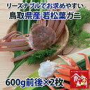 リーズナブルでお求めやすい!鳥取県産 訳あり若松葉ガニ1.2kg前後(1枚600g前後×2枚) 活と茹でをお選び頂けます【かに/カニ/蟹】