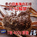 【送料無料】訳あり特上松葉ガニ(ズワイガニ) 活 小サイズ1...