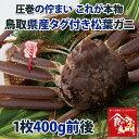【送料無料】タグ付き 特上松葉ガニ(ズワイガニ) 活 小サイズ1枚(400g前後)【かに/カニ/蟹】