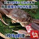 【送料無料】タグ付き 特上松葉ガニ(ズワイガニ) 活 特大サイズ1枚(1kg前後)【かに/カニ/蟹】