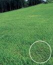 タキイ種苗 芝の種 野芝 ゼニス 1kg...