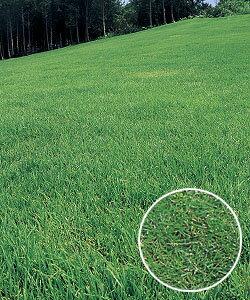 タキイ種苗 芝の種 野芝 ゼニス 1kg