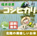 福井県産コシヒカリ 5kg(平成27年産) こしひかり